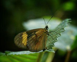 photography nature macro mysanctuary butterflies