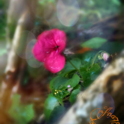 bokeh nature flower collage