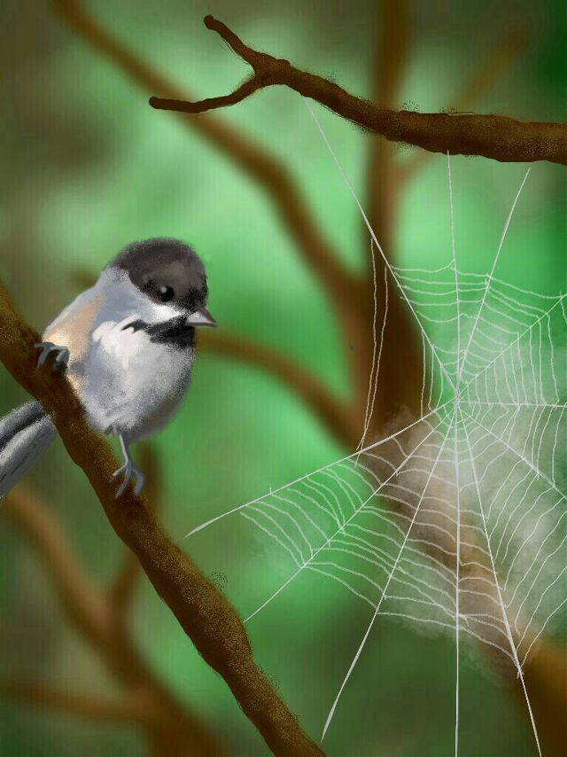 spiderweb drawing contest winner