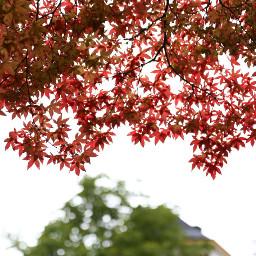 freetoedit leaves
