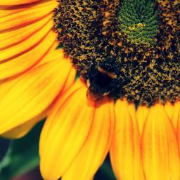 colorful colorsplash emotions flower nature