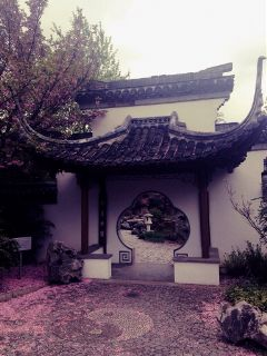 chinese garden beauty nature rainy