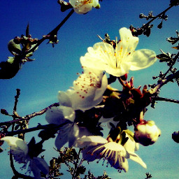 very beautiful nature spring like