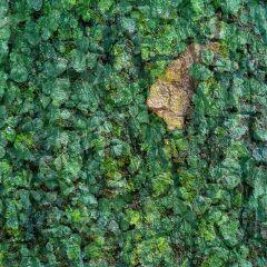 wapcamouflage