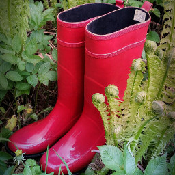 rainboots photography artistic red