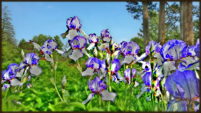 spring flower northeast