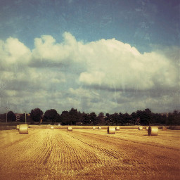 field wheat clouds landscape