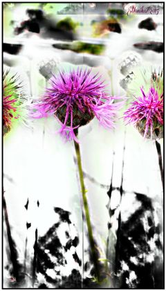 flower holga hdr popart edit