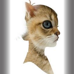 shapecrop kitten cat wapselectioncrop overlay