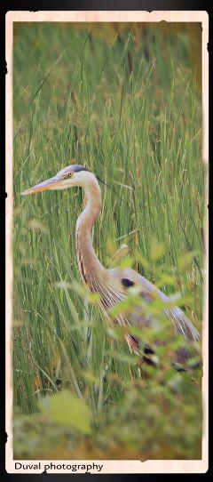 photography summer nature birds