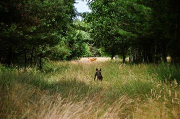 deer forest hunting nikon nikond90