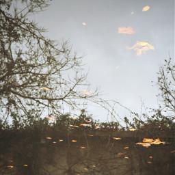 photography autumn water tree mirror