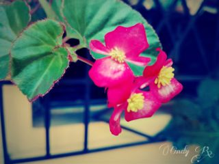 flower colorful nature cute photography