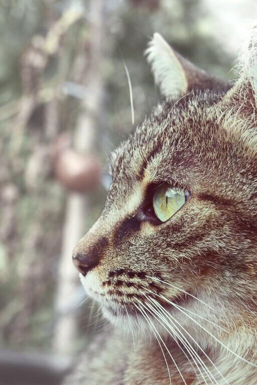 #cat #eye