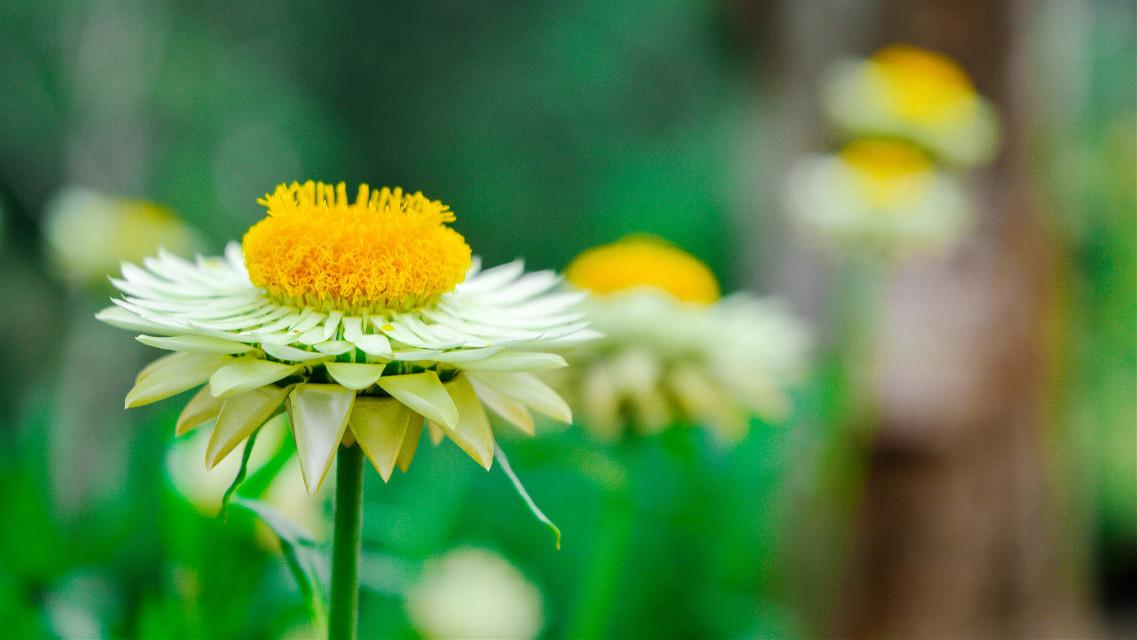 #flower #rain  @pa @talatrajput
