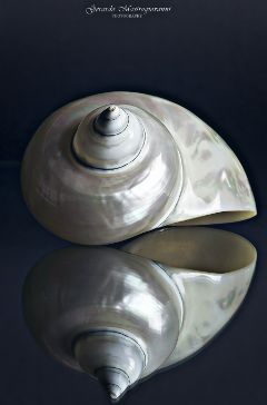 hdr photography stilllife reflections shell