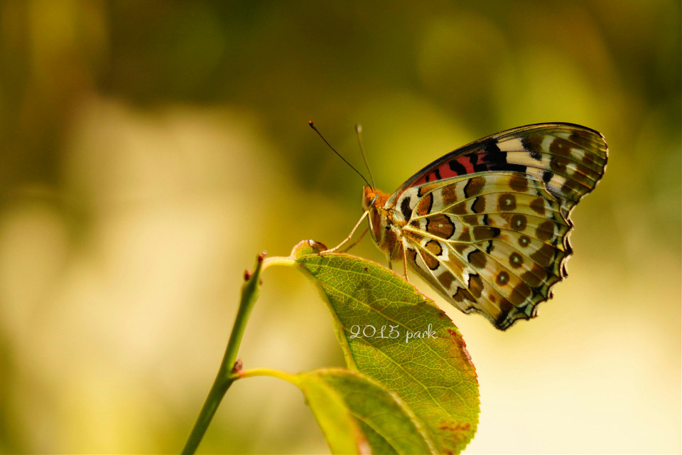 My favorite pic of a butterfly. 💕 #nature #colorful #love  #macro #photography
