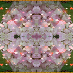 flower colorful geometry photography