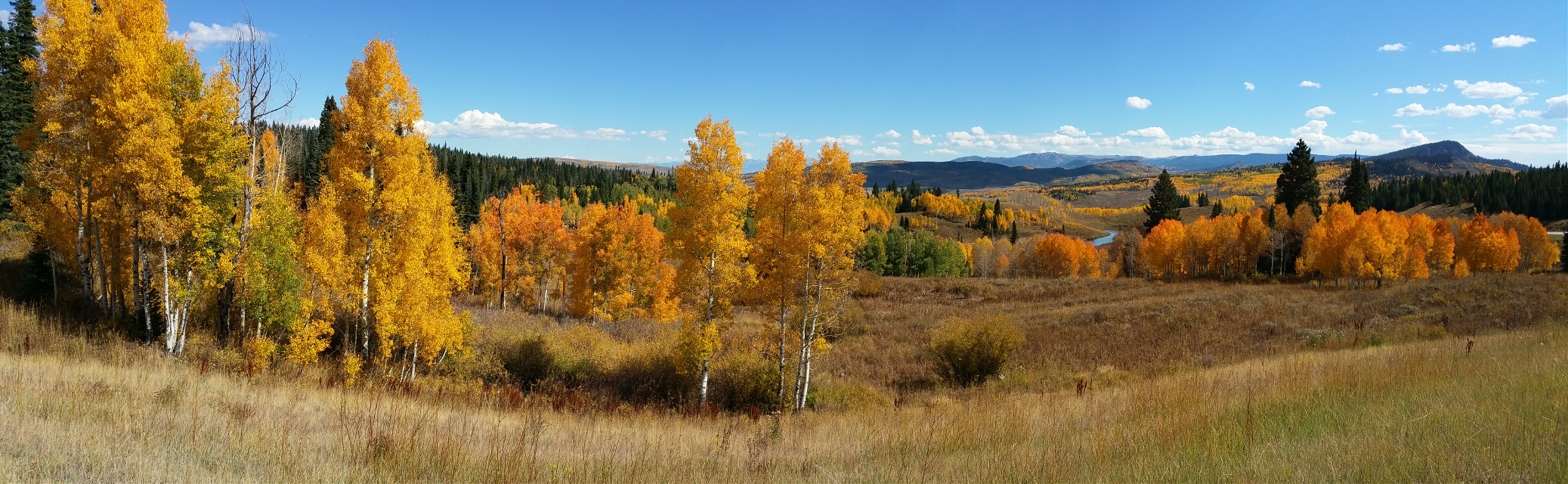 #nature   #photography #fallcolors #rockymountains #fall #aspen #colors #wooden #forest #mountains #trees #red #colorful