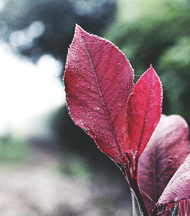 #nature #leaves #autumn #crisp #drama #outandabout #photography