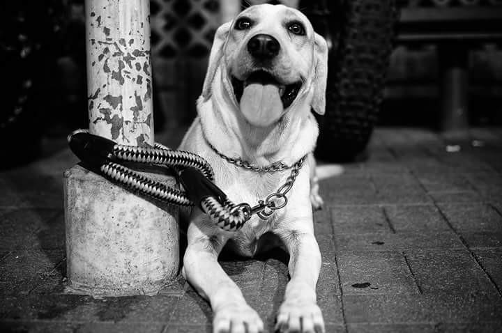 #puppy  #cute #hk #snap  #blackandwhite #blackandwhite