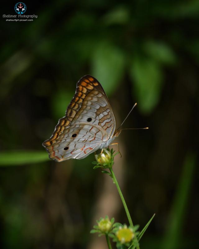 #insect #butterfly   #nature #natureaddict #natural #photography #nikonphotographers #nikond5200 #nikonistas #nikonnofilter