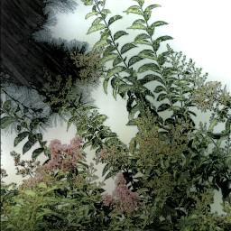nature photography colorful skecher myshot