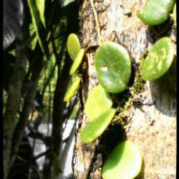 nature wildplant