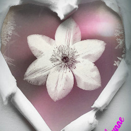 photography flower collage effects emotions